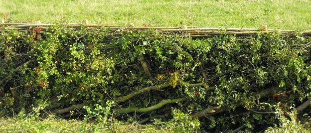 FG Sponsors Local Hedgelaying Competition