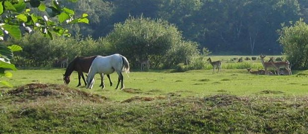 Top 10 Reasons To Move To the New Forest